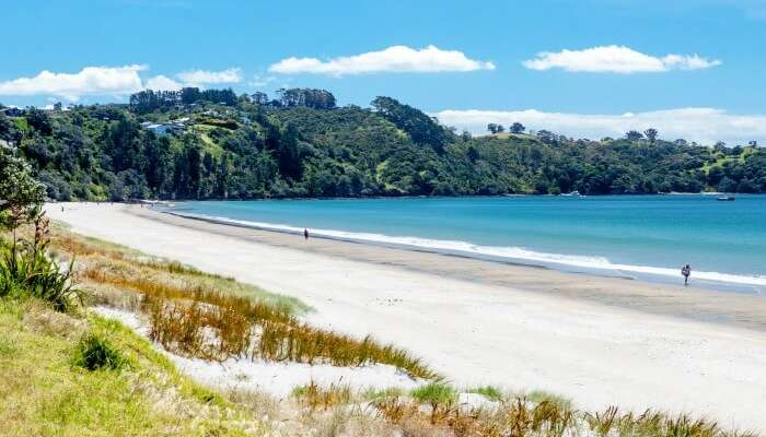 A traveler by the Oneroa Beach in Auckland