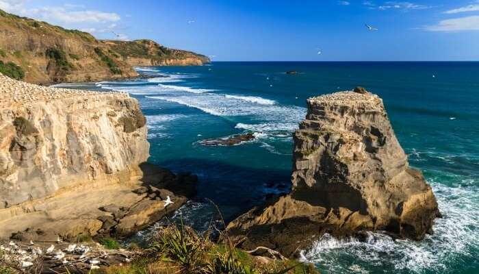 Cliffs and approaching waves by the Muriwai Beach in Auckland