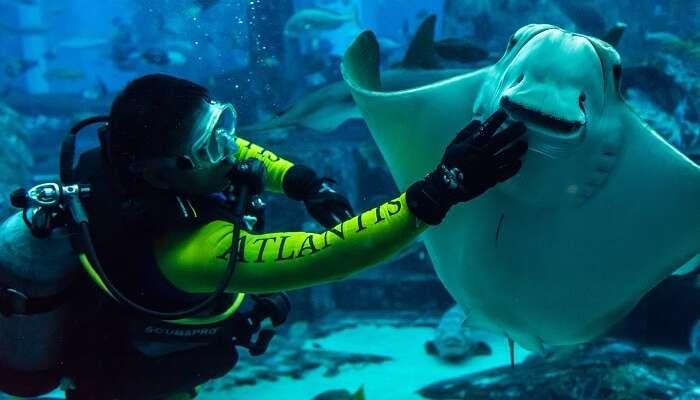 explore dubai's marine life at lost wonders