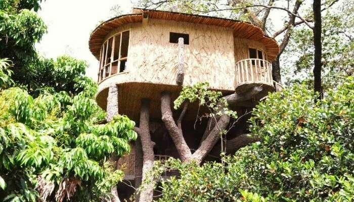 Treehouse view in the Den Corbett in Ramnagar