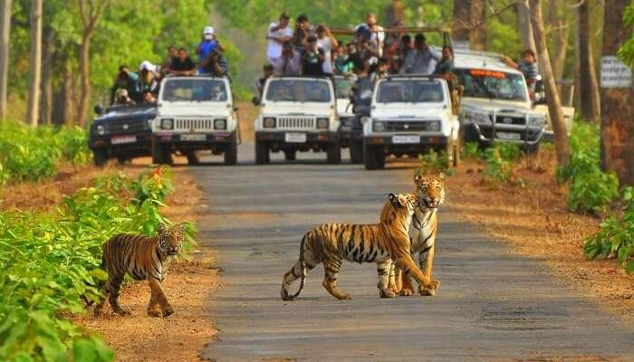 Best Wildlife Sanctuaries in India , Sariska National Park