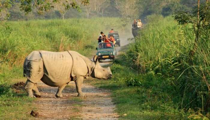 A group of tourist taking up a jeep safari in Kaziranga National Park