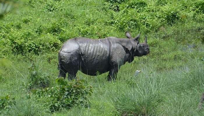 Entrance charges and timings for Gorumara National Park