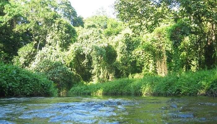 Flora and Fauna of Gorumara National Park