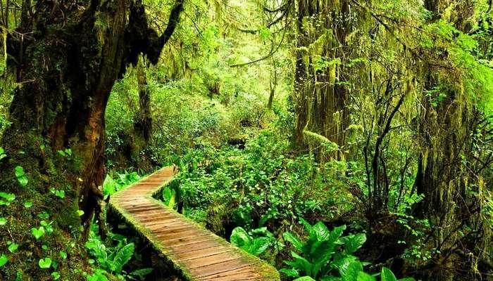 a wooden bridge amid Pacific Rim National Park
