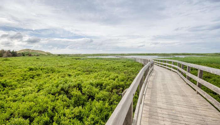 a wooden bridge in Prince Edward Island National Park