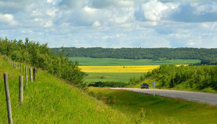 green fields in Riding Mountain National Park