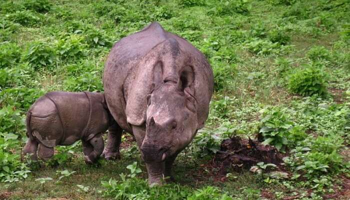 Chitwan National Park: For A Closer Encounter With The Nature