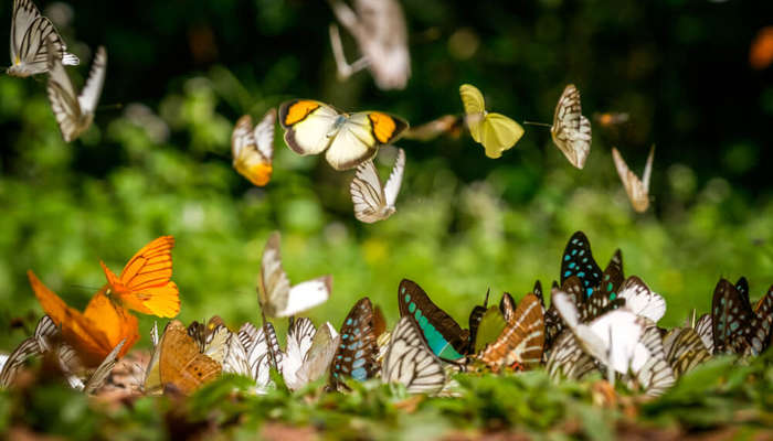 ideal places to spot numerous butterflies
