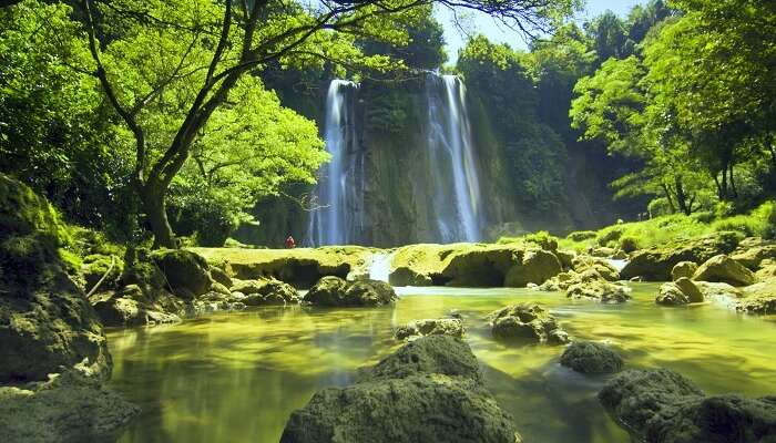 island with green lush