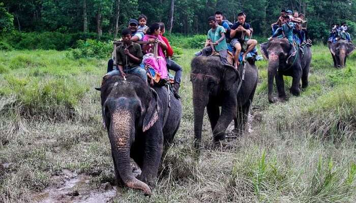 Go for an elephant safari