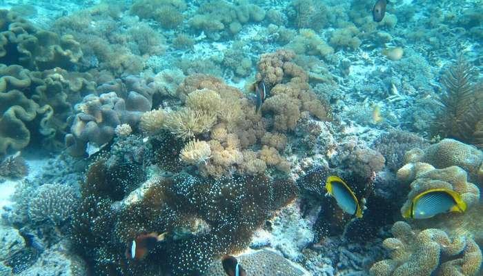 starfish5656