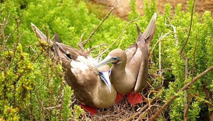 darwin bay red footed bird