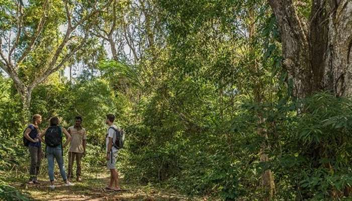 nature walk, travel, timor, indonesia