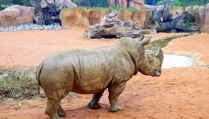 Largest Zoos In The World: 15 Spots That Are A Must Visit!