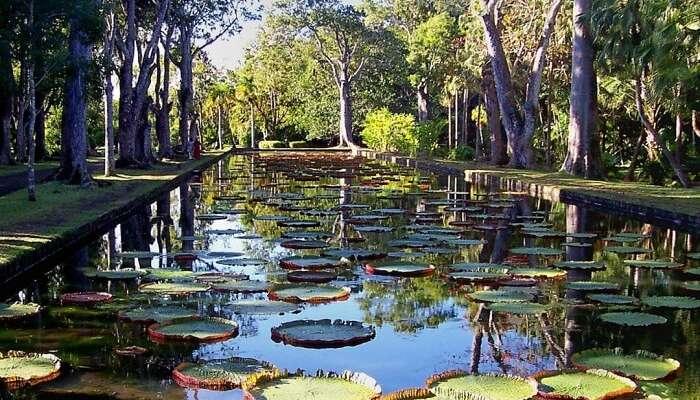 flora and fauna of Mauritius