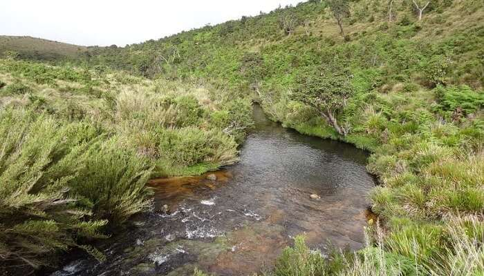 Best Time To Visit Horton Plains National Park
