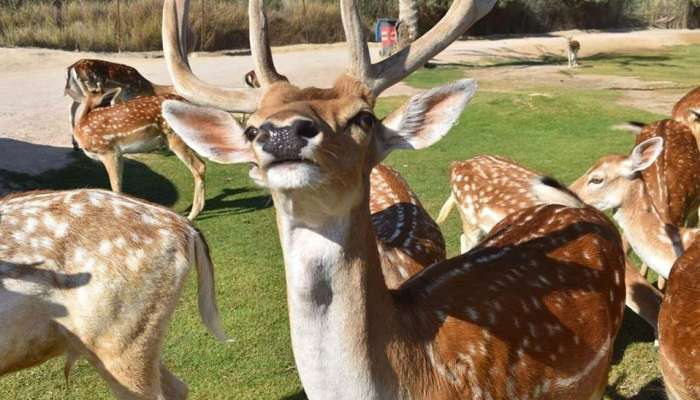 Africa Safari Park