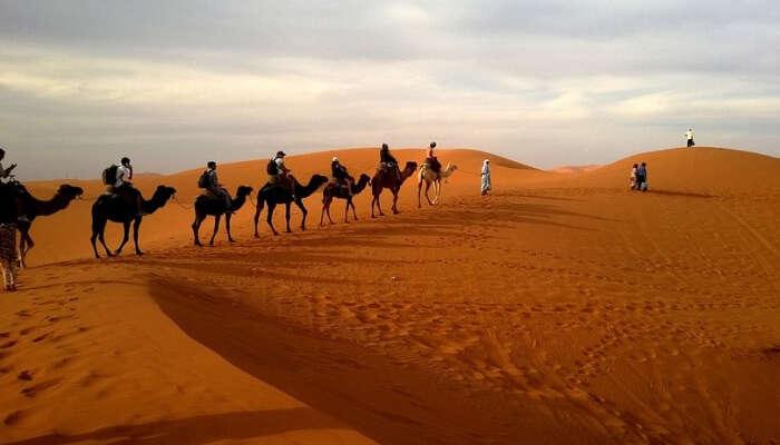 Arabian Nights Safari
