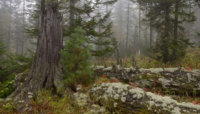 Baikal Nature Reserve