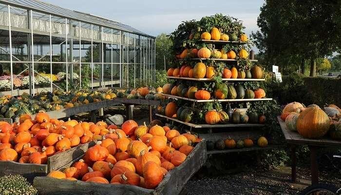 Halloween Harvest Festival