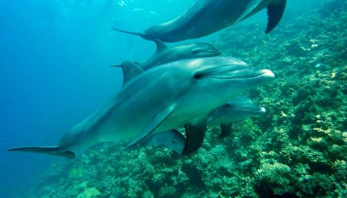 Sha'ab Samadai - Dolphin House Reef