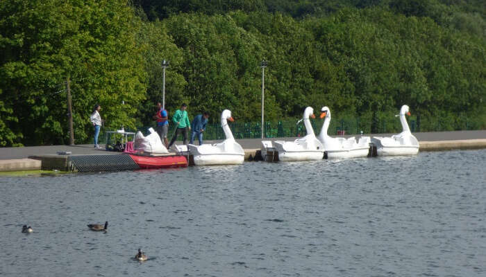 Swan Boat Rides