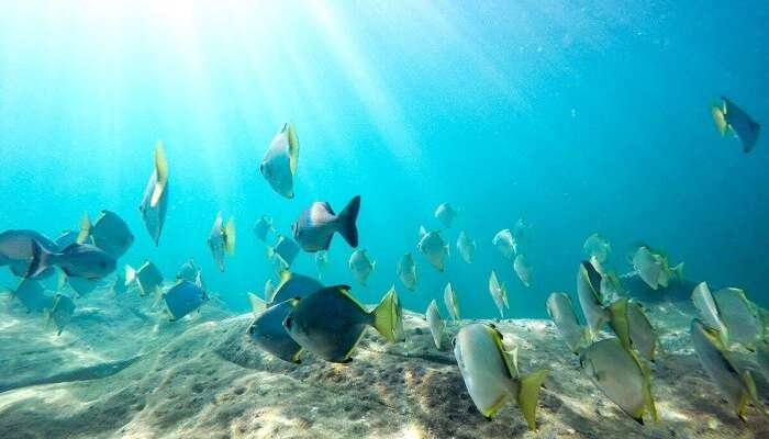 Snorkeling in Tanzania: 10 Exciting Spots To Snorkel