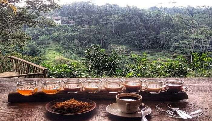 Coffee Plantation At Bali Pulina Agro Tourism All You Need