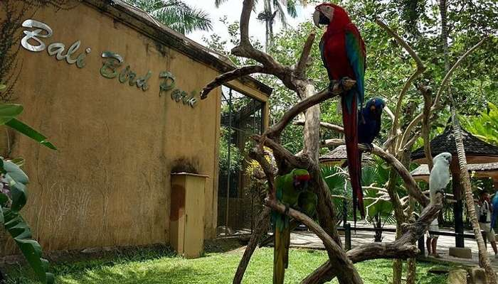 Bali Bird Park A Guide For A Calming 2019 Holiday Experience