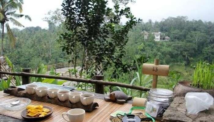Image result for bali ubud coffee tour