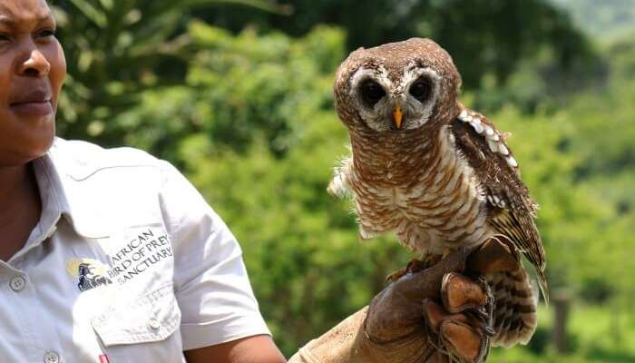 Go for African bird watching in the African Bird of Prey Sanctuary