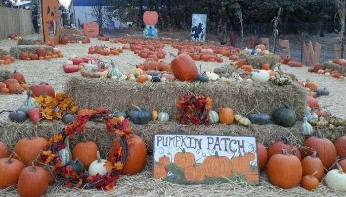 Haunted Pumpkin Festival