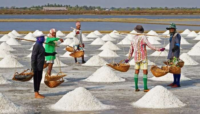 Salt farming view