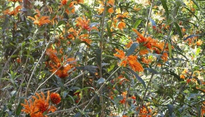 Visit the KwaZulu-Natal National Botanical Garden