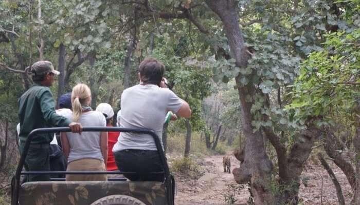 A Jungle Safari At The Khao Lak Park