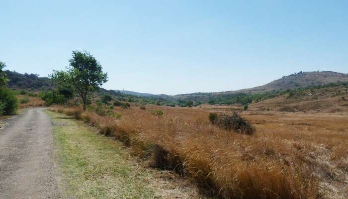 Hiking At Groenkloof Nature Reserve