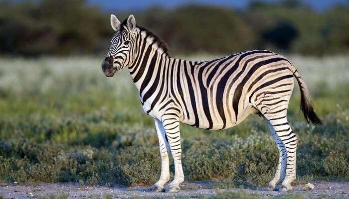 Hluleka Wildlife Reserve Trails