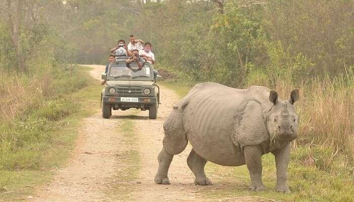 Kaziranga National Park View