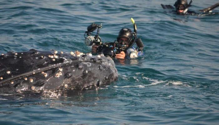 Offshore Africa
