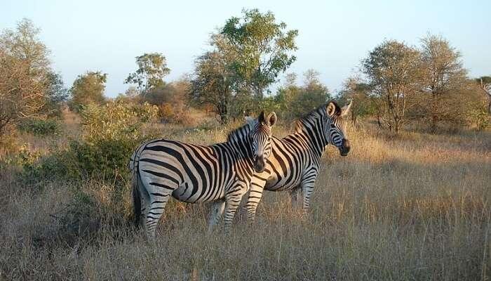 Pretoria To Kruger National Park
