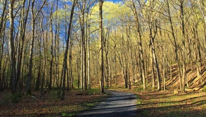 Springleaf Nature Park