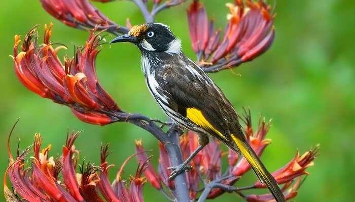 Birdwatching in Fiji