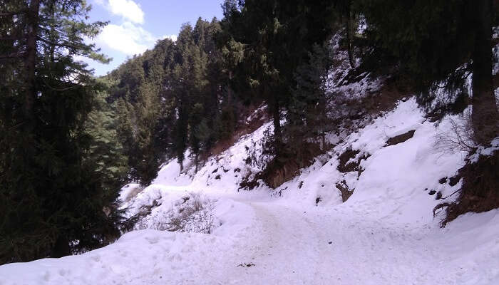 Places for honeymoon in Shimla