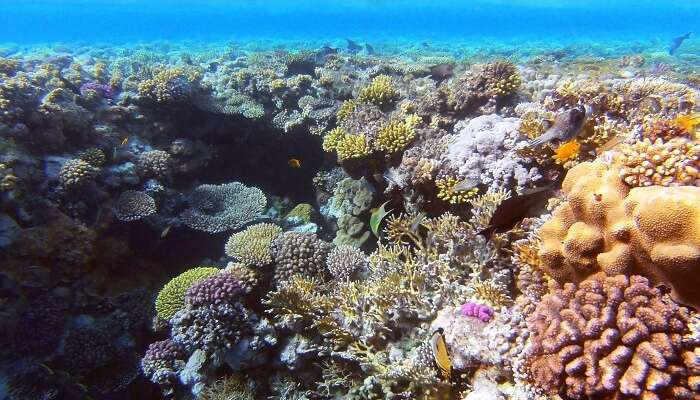 Ras Muhammad National Park coral reefs