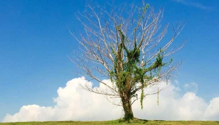 The Instagram tree