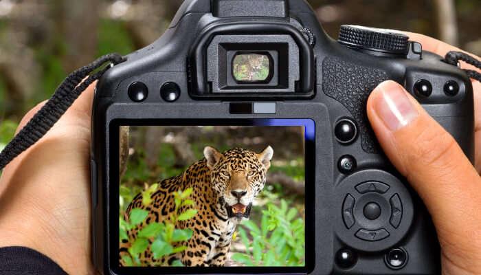 Fotografie de animale