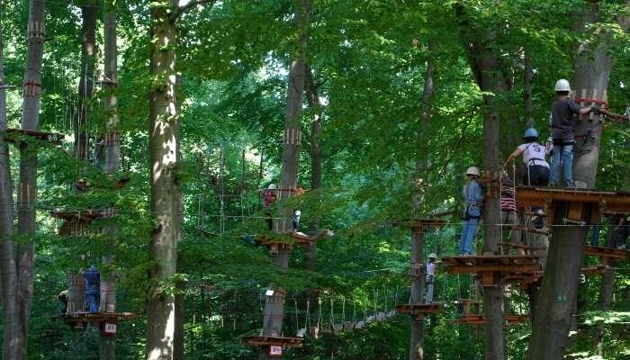 Treetop adventure activities
