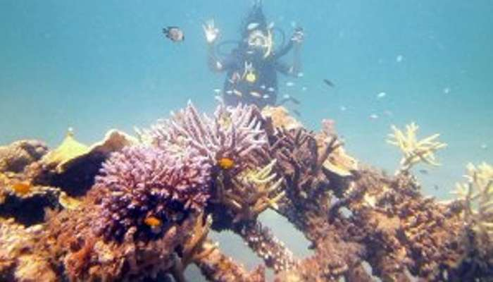 Snorkeling Amed Bali