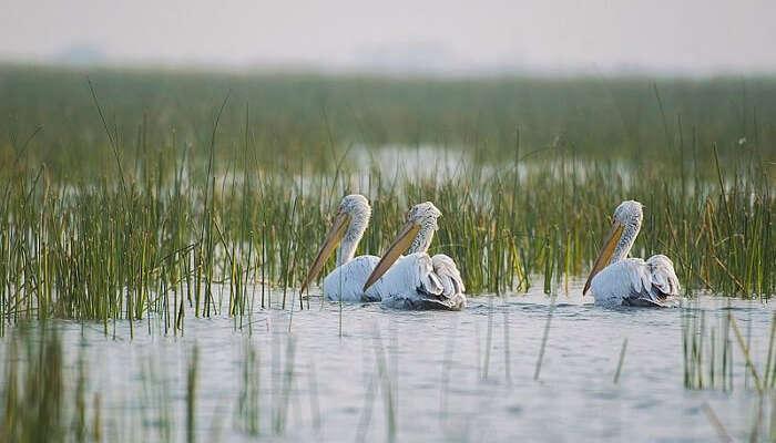 Bird sanctuary in Vadla holidays Places gujarat india
